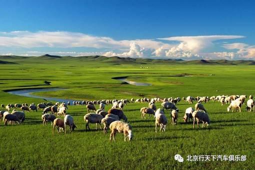 暑期自驾丨2021.07.31-08.08穿越内蒙古呼伦贝尔大草原感受清爽自驾之旅