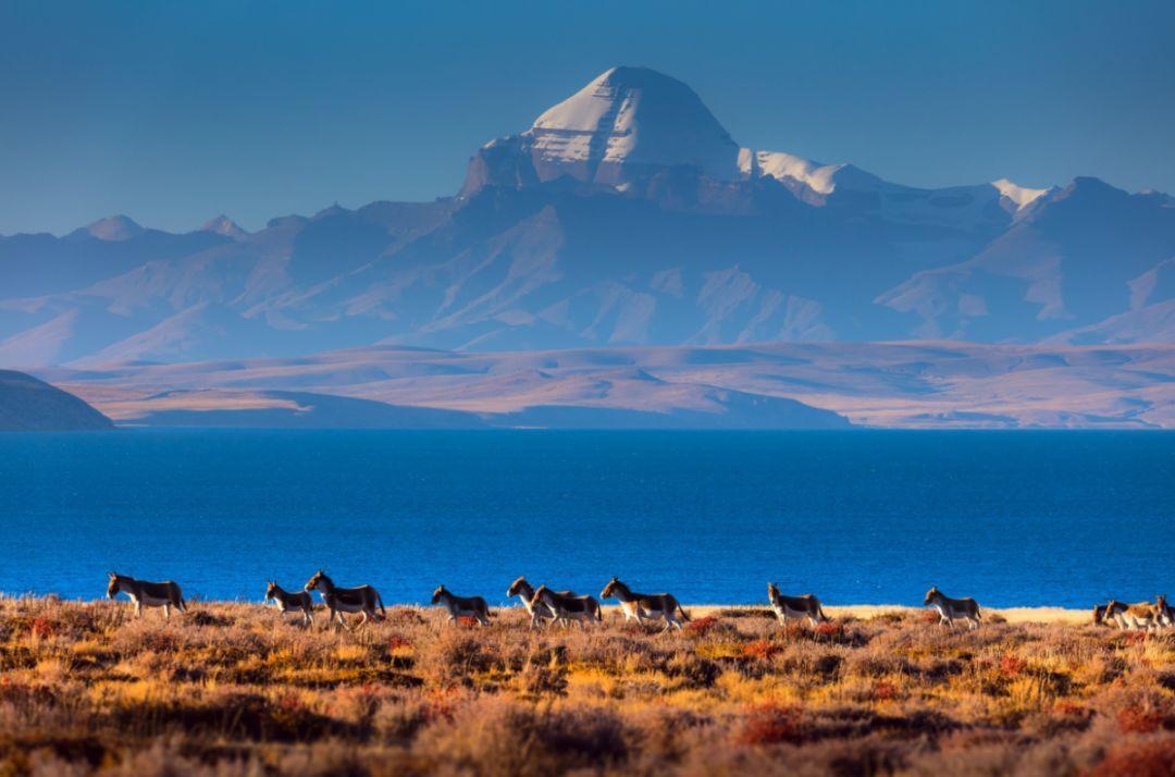 西藏自驾丨2021.09.20—30西藏以西才是西藏,一念阿里